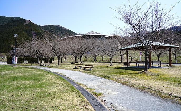 アルパス 桜の散策路